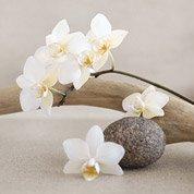 Affiche White orchids l.30 x H.30 cm