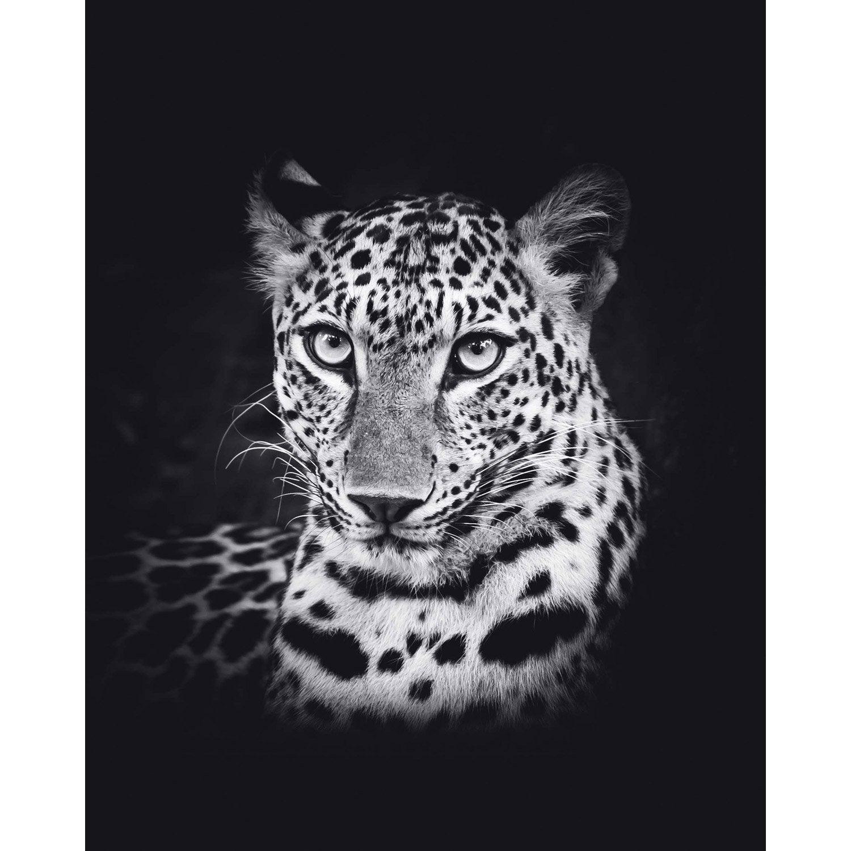 Affiche leopard l.40 x H.50 cm