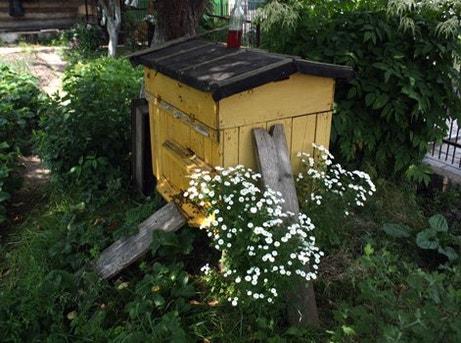 une ruche dans son jardin bonne id e si l on se fait. Black Bedroom Furniture Sets. Home Design Ideas