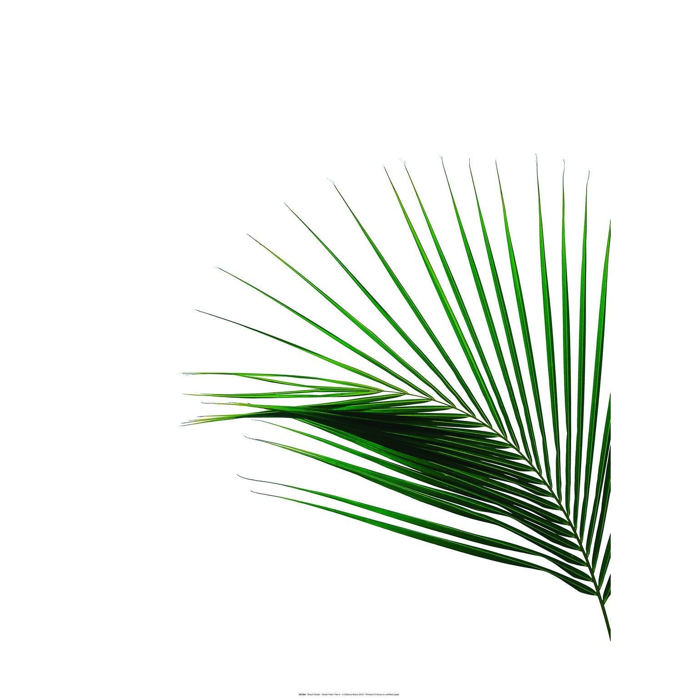 Affiche Green palm tree 2, blanc et vert l.60 x H.80 cm