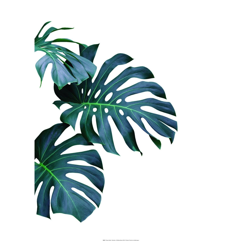 Affiche Monstera, vert et blanc l.50 x H.70 cm