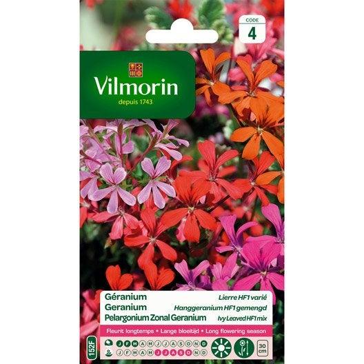 G ranium lierre songe d 39 t f1 vari multicolore leroy - Graine de geranium ...