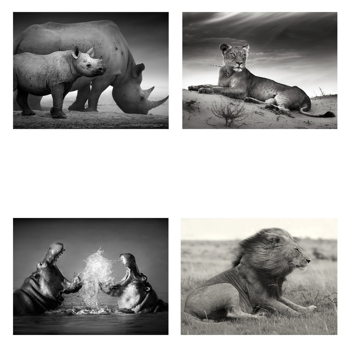 Set de 4 images Animaux de la savane l.40 x H.50 cm