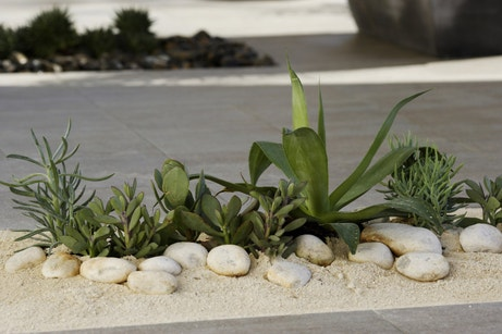 Un massif de plantes grasses sur une terrasse moderne