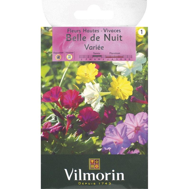 Belle De Nuit Graines De Fleurs Multicolore Leroy Merlin