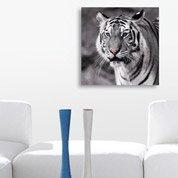 Verre imprimé Tiger with blue eyes DECO GLASS l.50 x H.50 cm