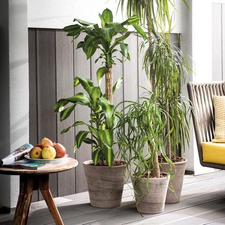 Un intérieur en mode jungle