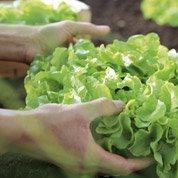Atelier projet : comment jardiner BIO ?