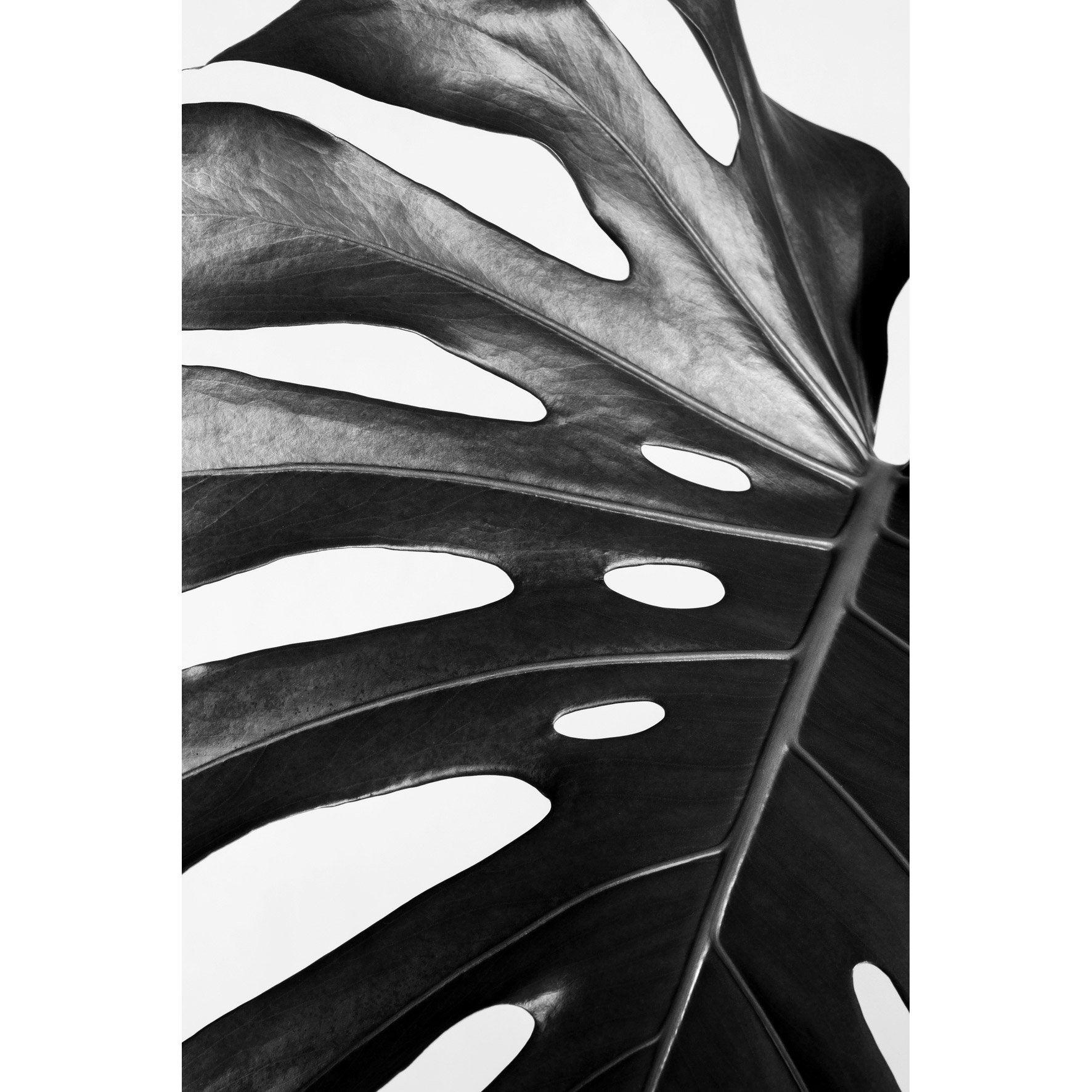 Image encadrée FEUILLE PHILODENDRON ARTIS l.62.7 x H.92.2 cm