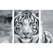 Verre imprimé Tigre l.60 x H.80 cm