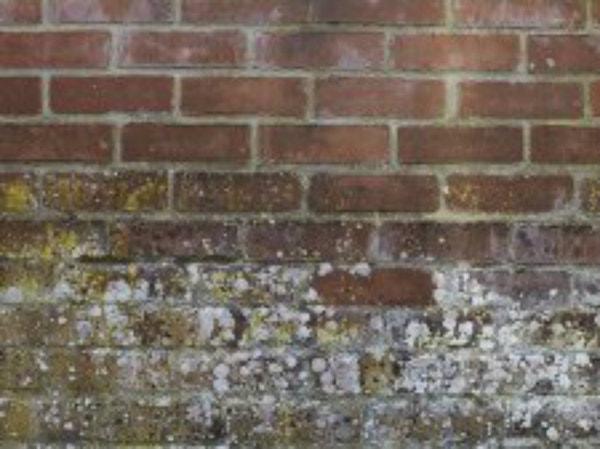 Traiter Les Murs Contre L Humidite Mur Poreux Friable Avec Mousses Etc Leroy Merlin