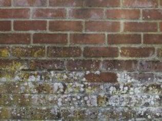 Comment Traiter Les Moisissures Le Salpêtre Et Les Tâches Leroy - Enlever peinture mur exterieur