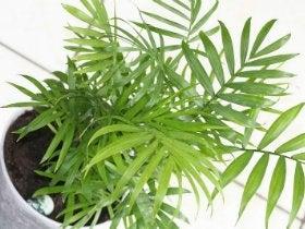 comment choisir ses plantes d polluantes leroy merlin. Black Bedroom Furniture Sets. Home Design Ideas