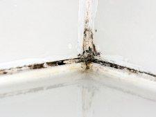 enlever moisissure joint. simple pour joints de carrelage u ... - Moisissure Joint Carrelage Salle De Bain