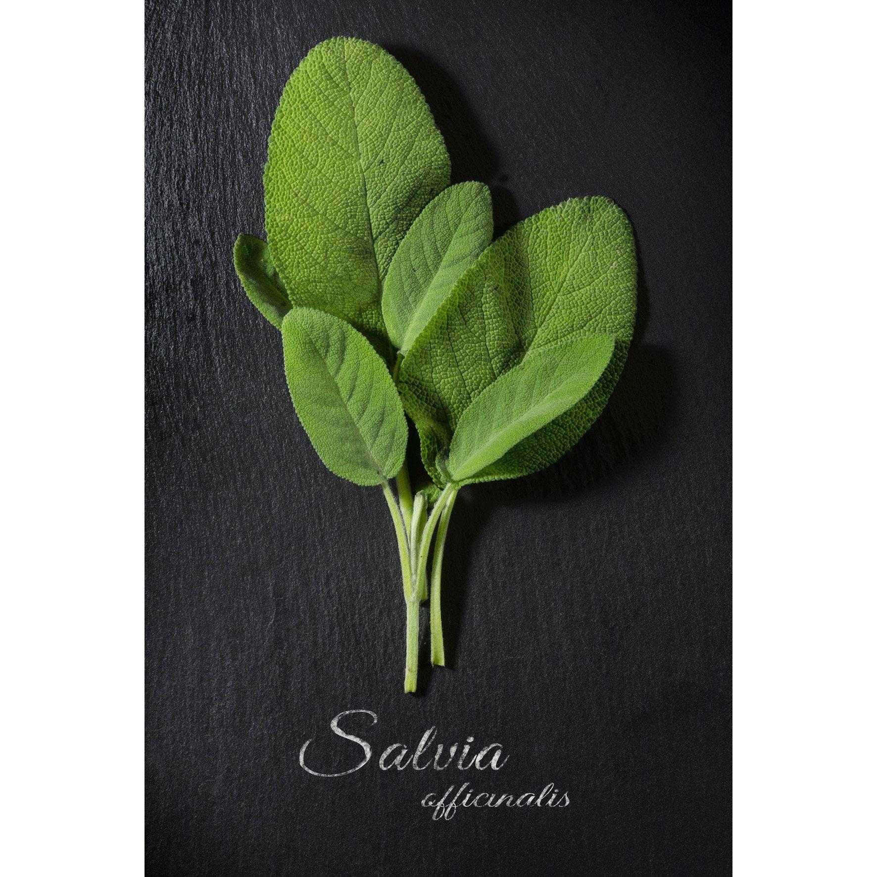 Verre imprimé SAUGE, gris vert et blanc ARTIS l.44.5 x H.30 cm