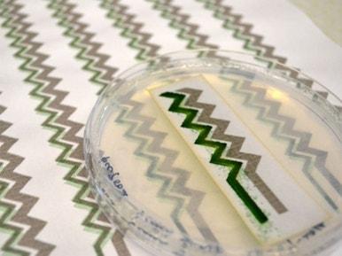 Bientt Un Papier Peint Base Dalgues Qui Produit De Llectricit