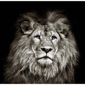 Toile imprimée Lion l.60 x H.60 cm