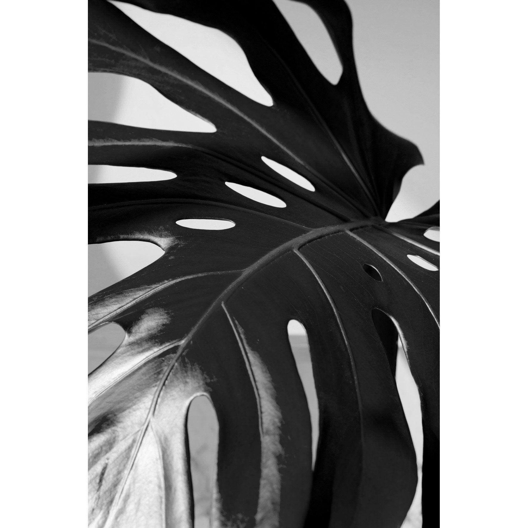 Image encadrée PHILODENDRON ZOOM ARTIS l.62.7 x H.92.2 cm